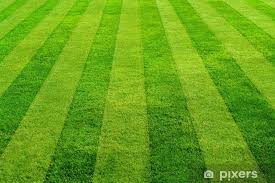 Blog - How To Mow Stripes Into Your Lawn - Stewarts Turf