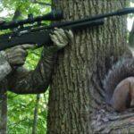 Air rifle for squirrels