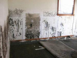 Mold and Mildew odor- first home essentials checklist